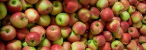gb apples